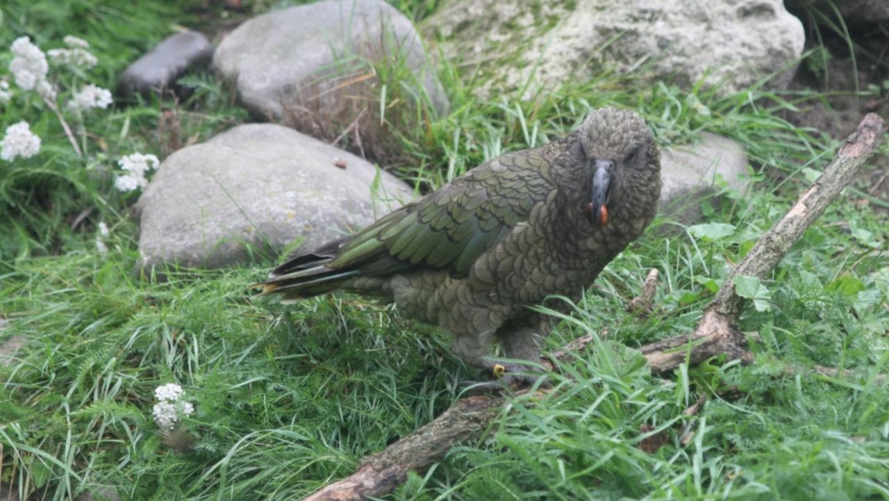 僕のニュージーランド旅行記、南天の星空を求めて(6)ークライストチャーチ、ウィローバンク野生動物公園編ー