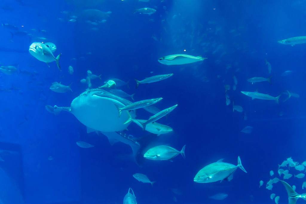 お気に入りの写真まとめ ~魚と水棲動物~